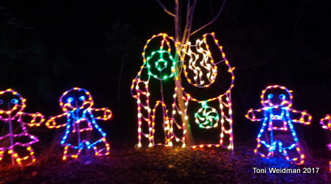 Lowry Park Zoo Christmas.Events In Tampa Fl Archives Toni Weidman Trinity Fl