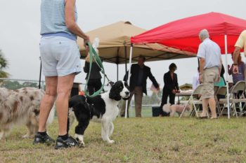 Canine Capers 4th Annual Walk