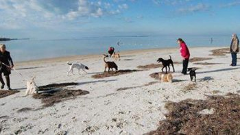 Bark At The Beach - New Port Richey