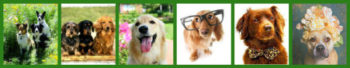 Yappy Hour Trinity At Fiddlers Green-May 10