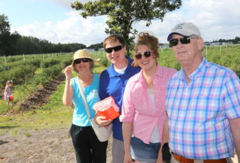 Picking Blueberries At Starkey Blueberry Farm
